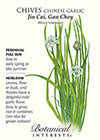 Chives Chinese Garlic HEIRLOOM Seeds