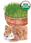 Cat Grass Mix Organic Seeds