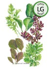 Baby Greens Must Have Mustards Seeds (LG)